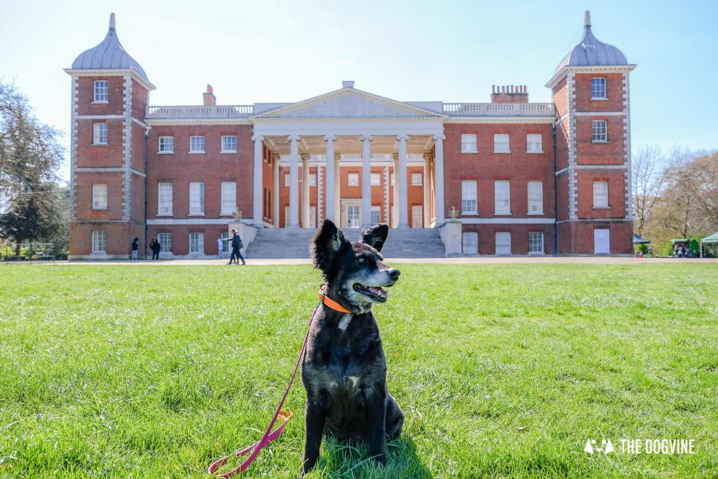 Dog-Friendly Osterley Park and House - Visiting With Your Dog 1