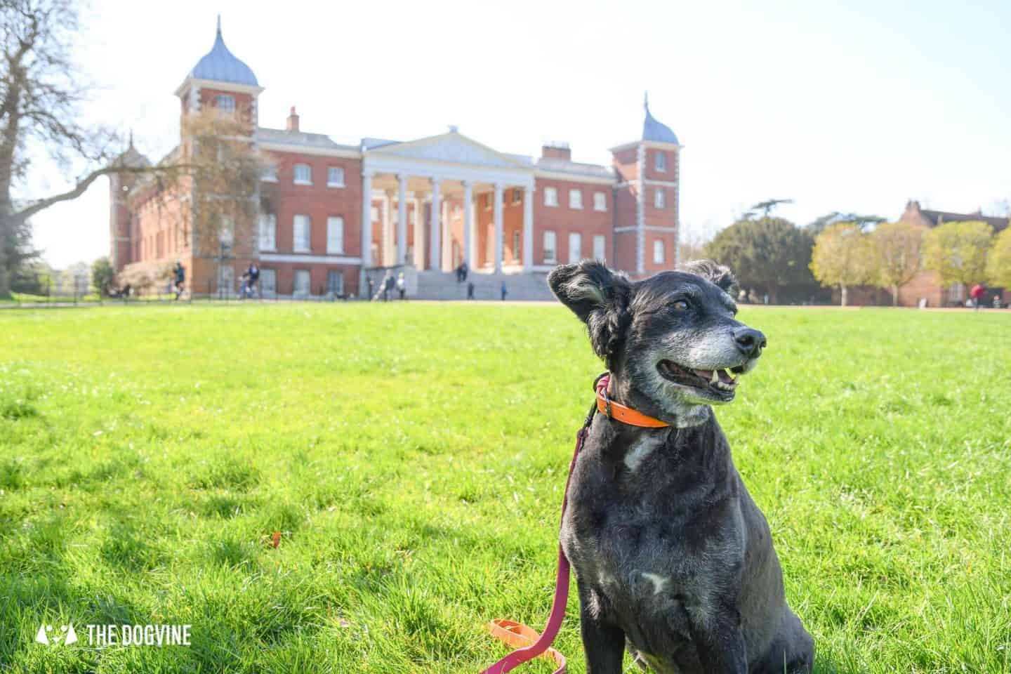 Dog-Friendly Osterley Park and House - Visiting With Your Dog 10