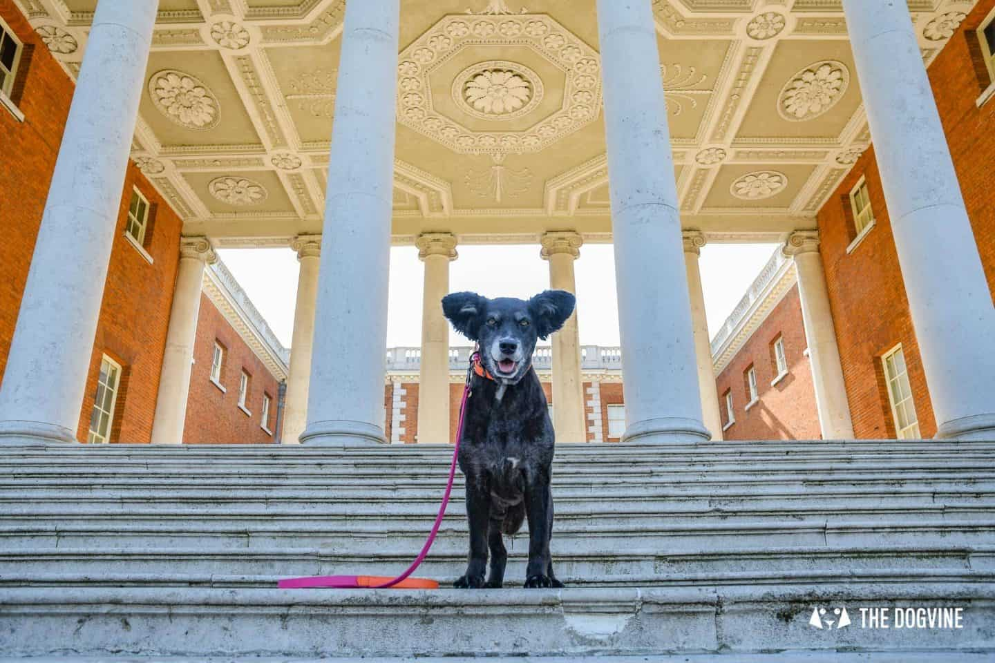 Dog-Friendly Osterley Park and House - Visiting With Your Dog 13