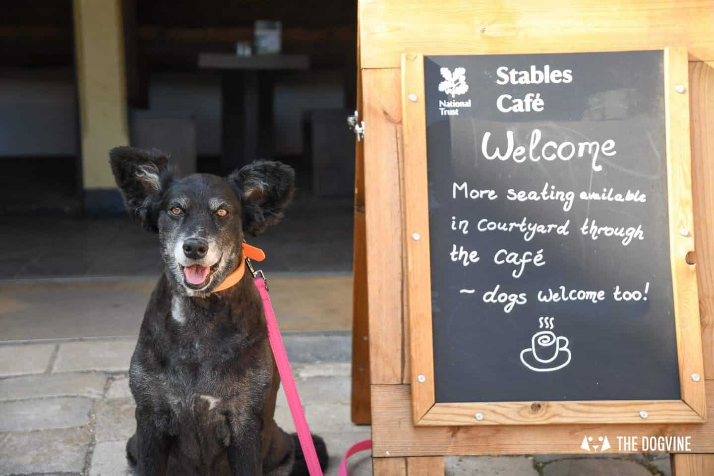 Dog-Friendly Osterley Park and House - Visiting With Your Dog 15