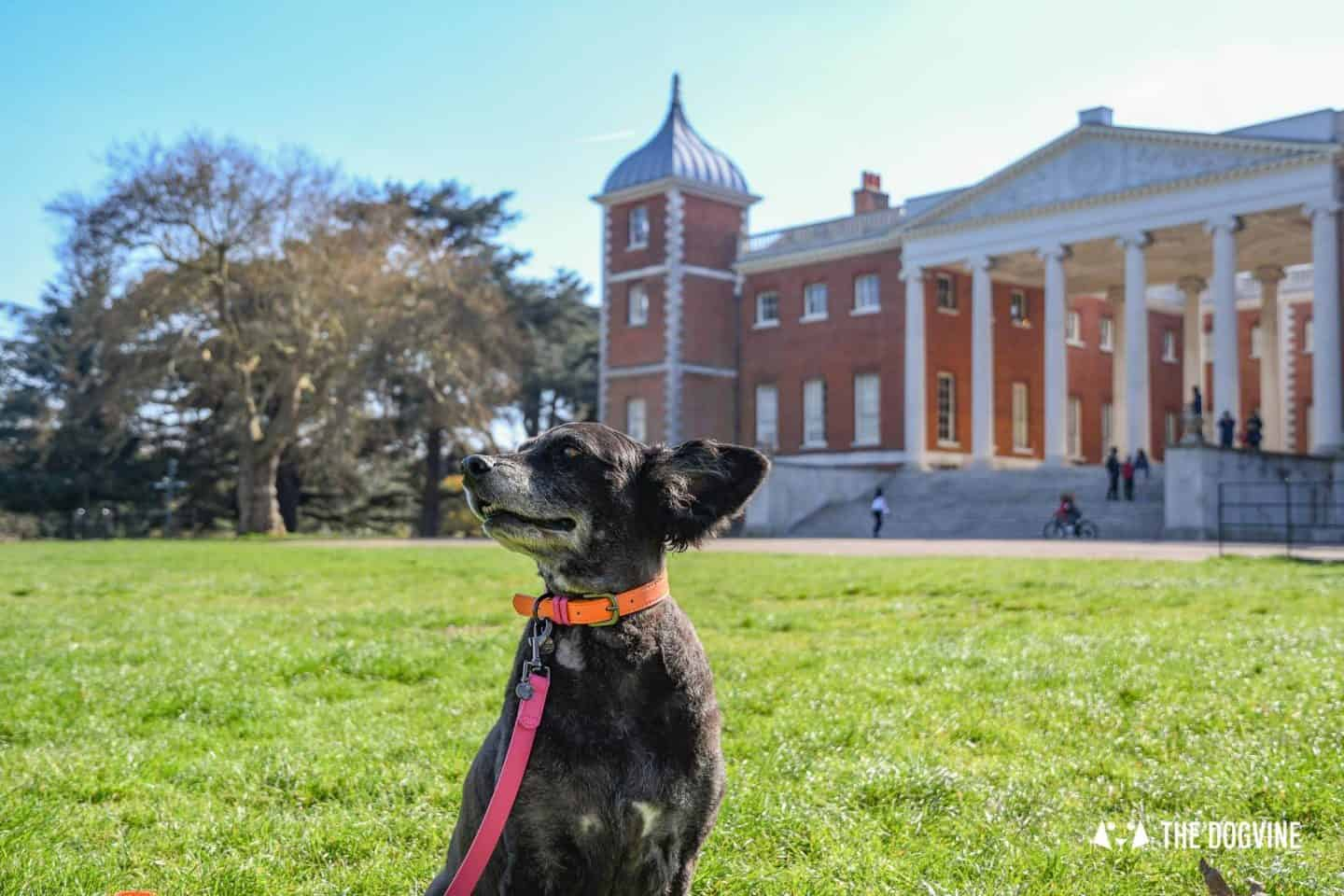 Dog-Friendly Osterley Park and House - Visiting With Your Dog 18