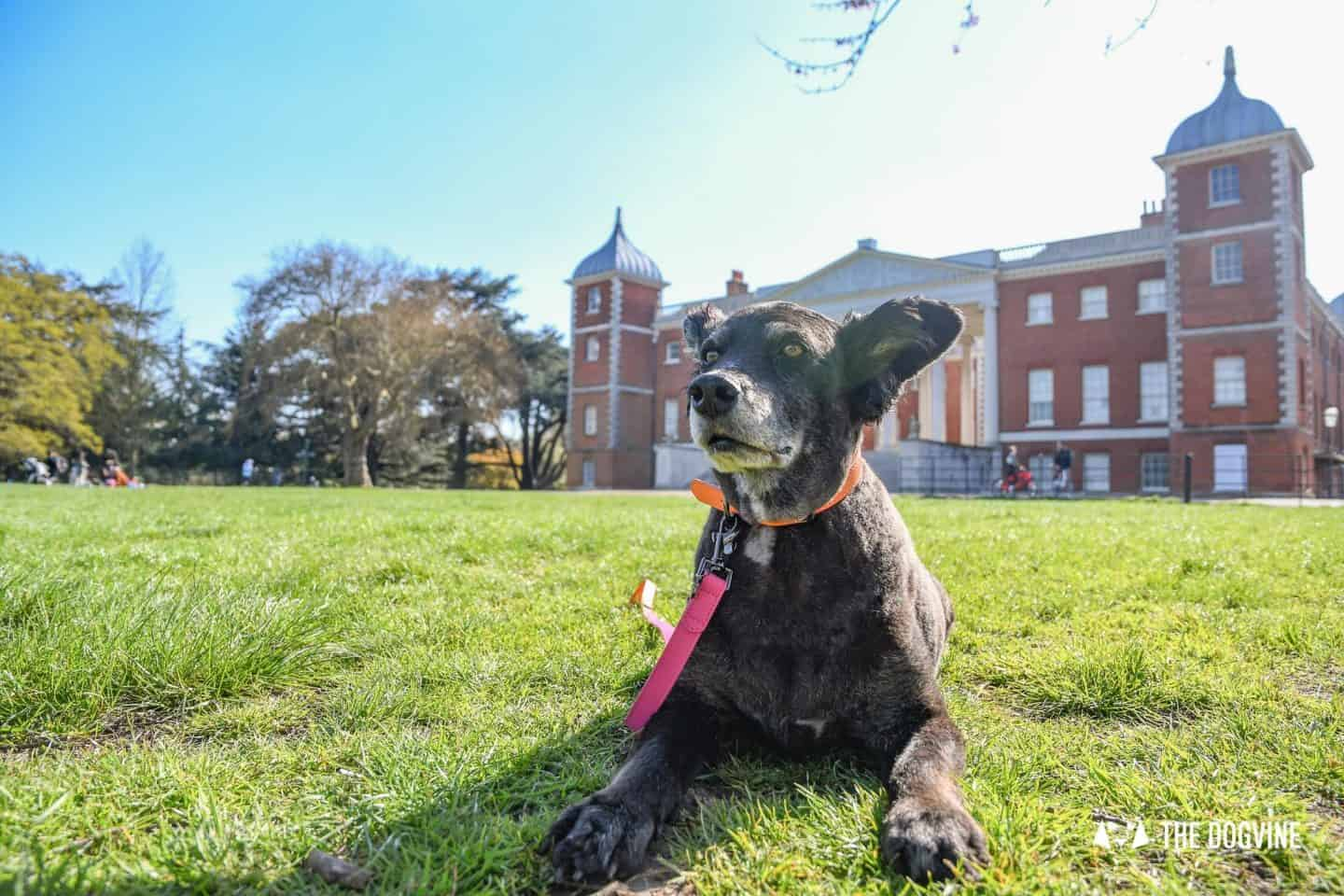 Dog-Friendly Osterley Park and House - Visiting With Your Dog 19