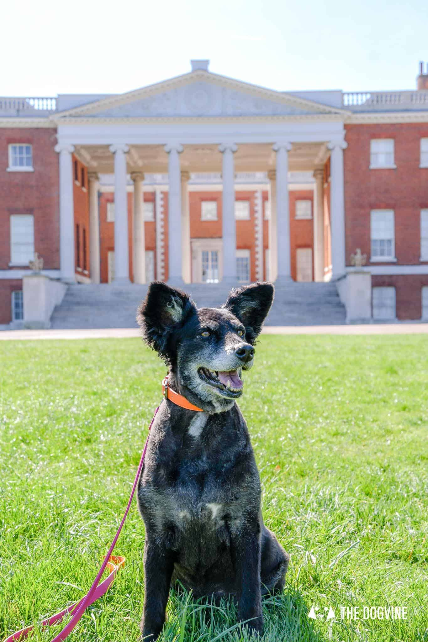 Dog-Friendly Osterley Park and House - Visiting With Your Dog 2