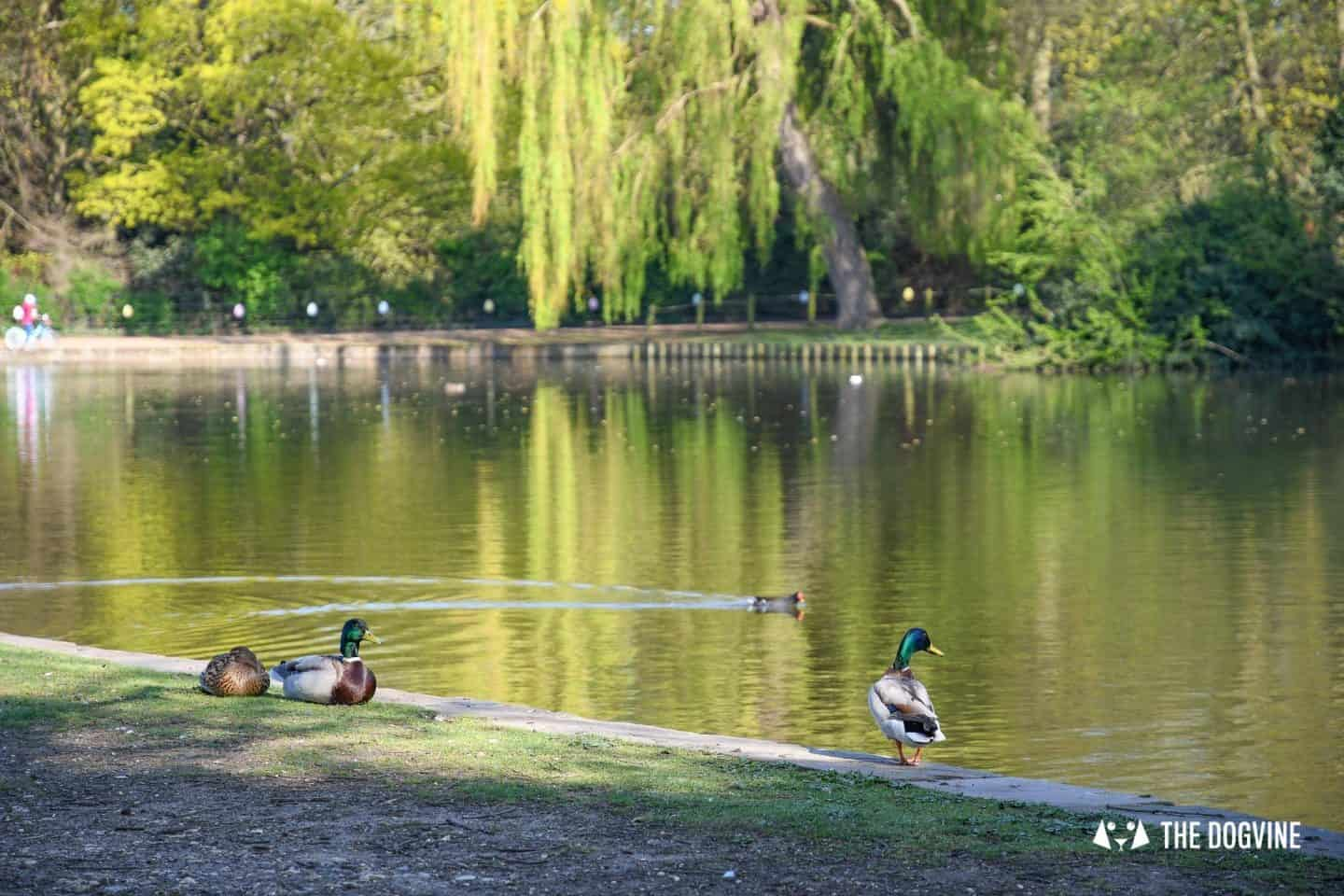 Osterley Park and House - Ducks at the lake