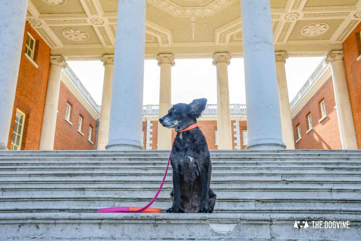 Dog-Friendly Osterley Park and House - Visiting With Your Dog 25