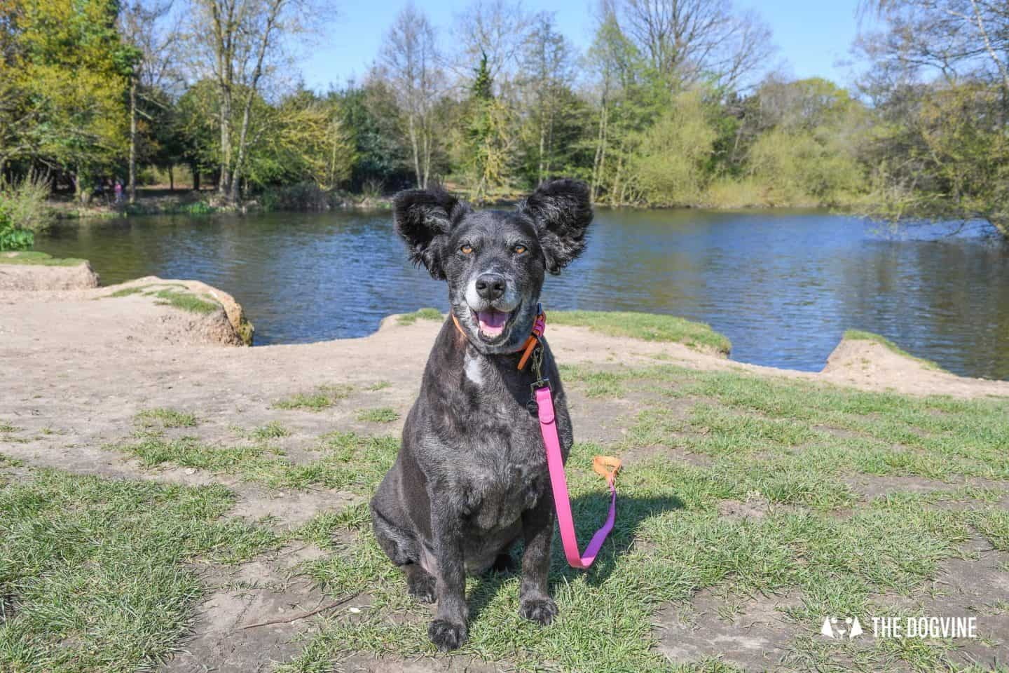 Dog-Friendly Osterley Park and House - Visiting With Your Dog 6