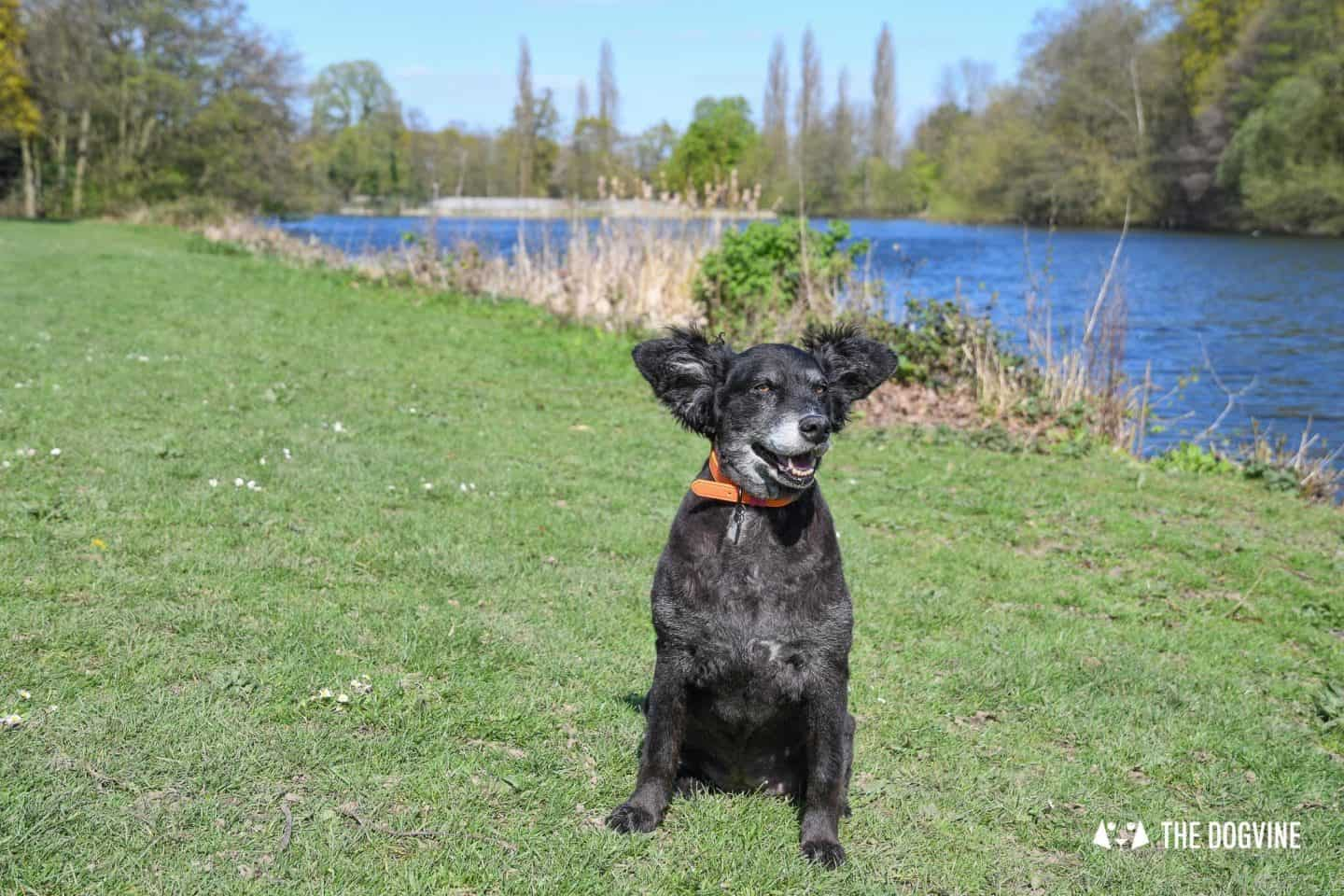 Dog-Friendly Osterley Park and House - Visiting With Your Dog 9