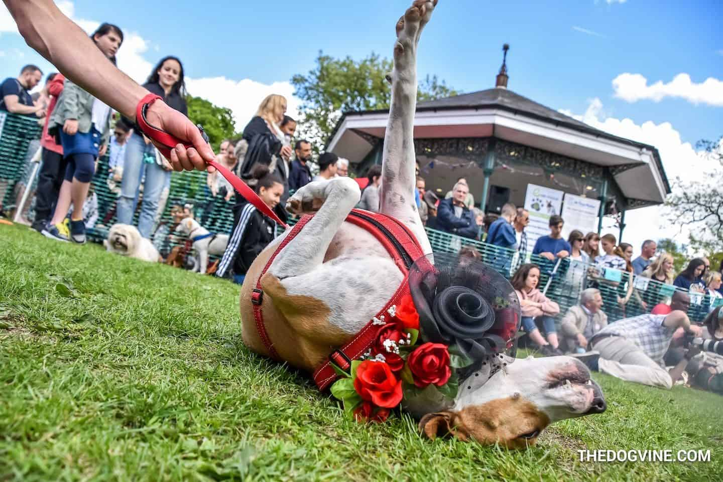 Dog-friendly Events and Things to do in May - Dog Shows