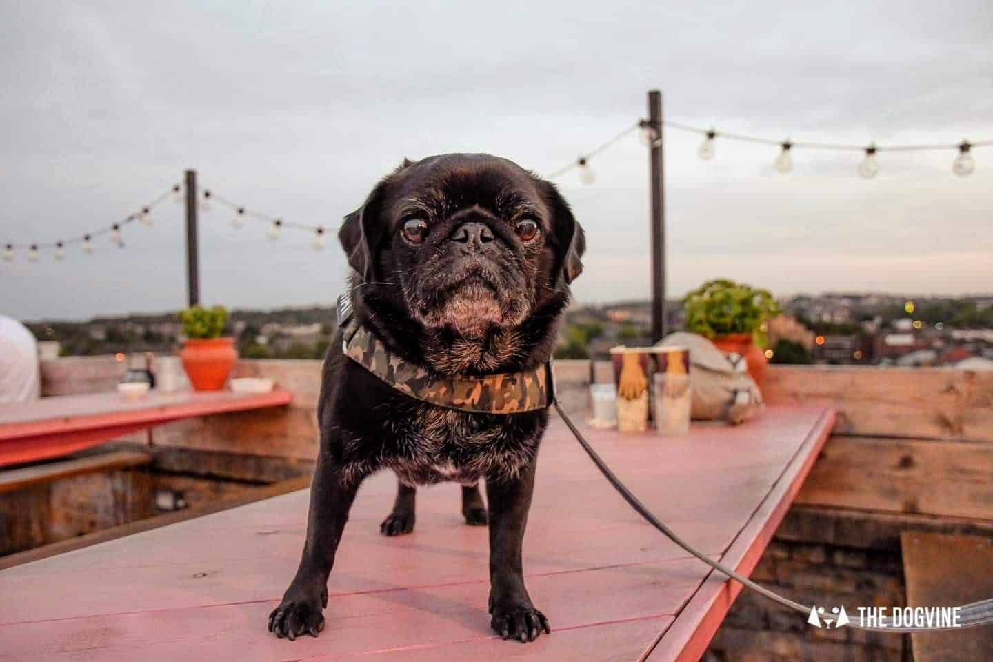 Dog-friendly Events and Things to do in May - Hemingway at Bussey Rooftop Bar