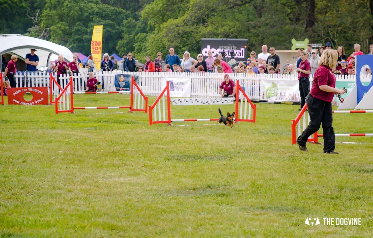 Dogstival New Forest Dog Festival Is A Barking Success 16