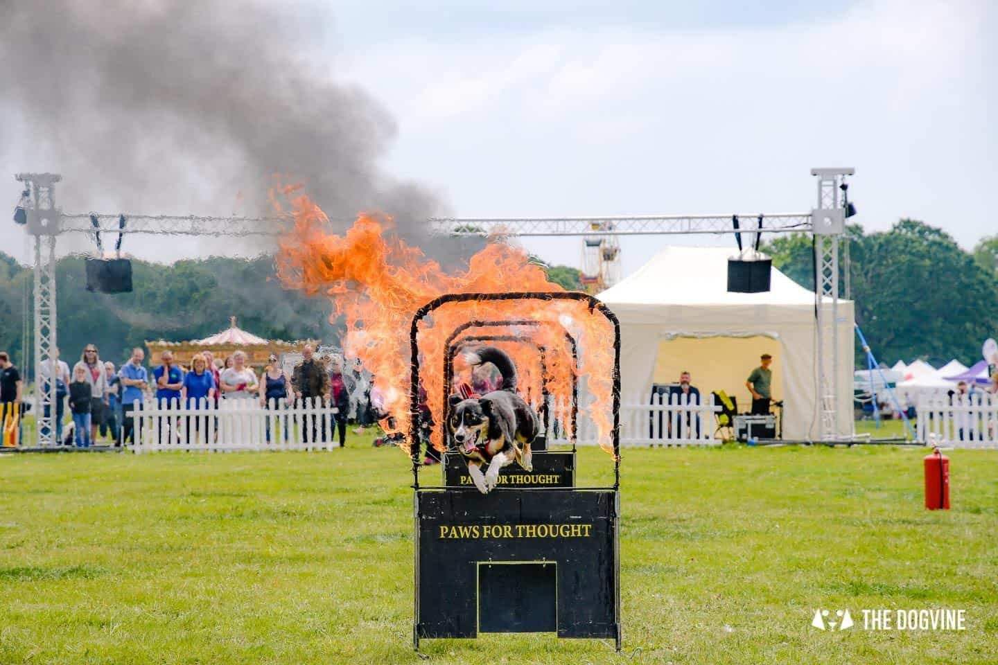Dogstival New Forest Dog Festival Is A Barking Success - Paws for Thought Dog Display Team 2