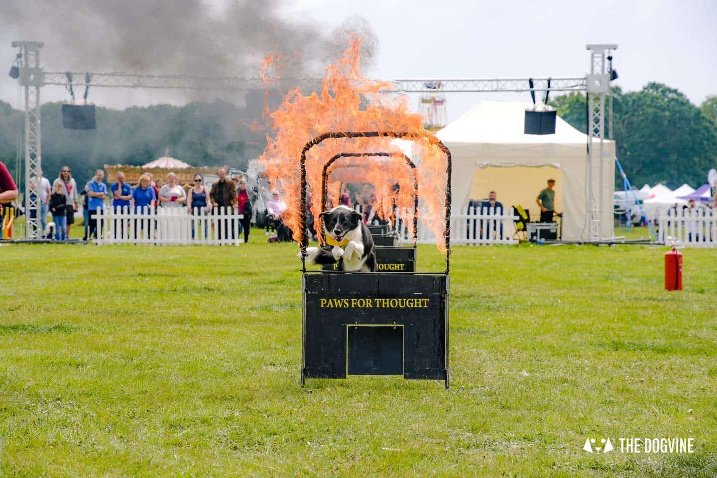 Dogstival New Forest Dog Festival Is A Barking Success - Paws for Thought Dog Display Team 1