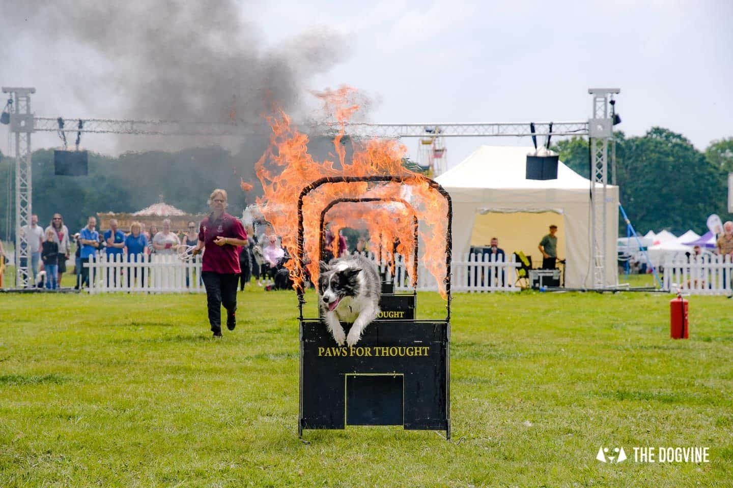 Dogstival New Forest Dog Festival Is A Barking Success - Paws for Thought Dog Display Team