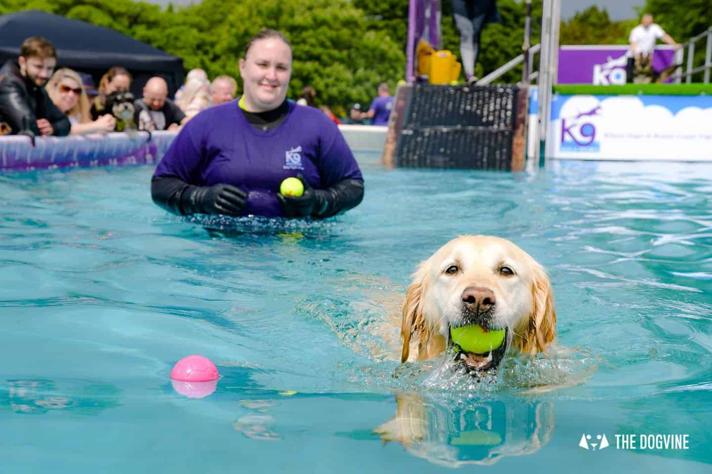 Dogstival New Forest Dog Festival Is A Barking Success 25