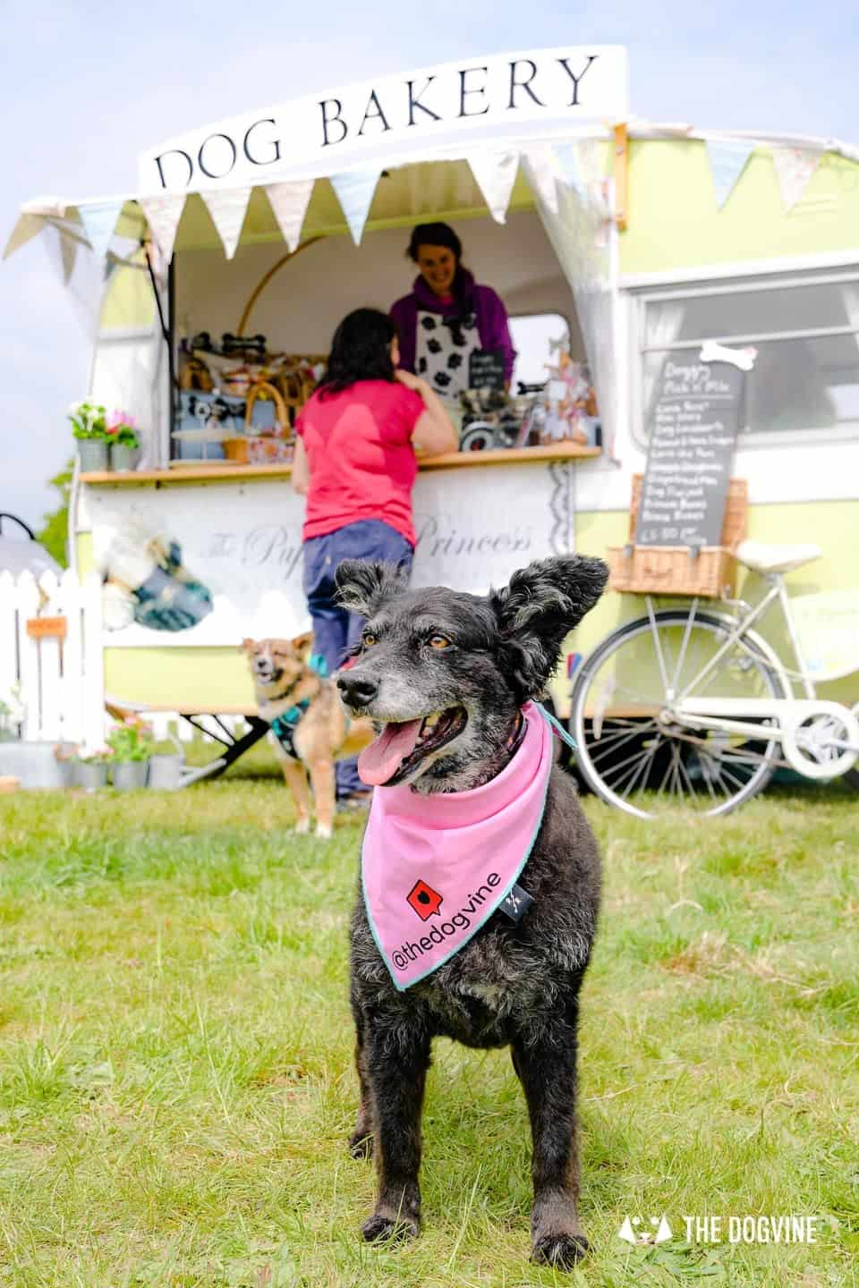 Dogstival New Forest Dog Festival Is A Barking Success 31