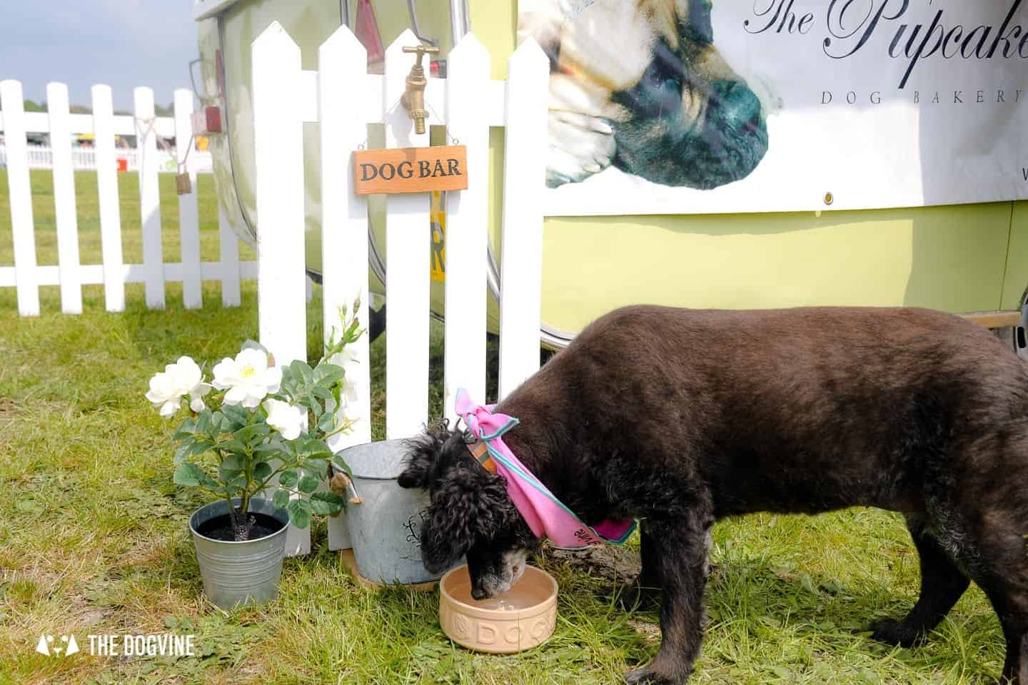 Dogstival New Forest Dog Festival Is A Barking Success 33