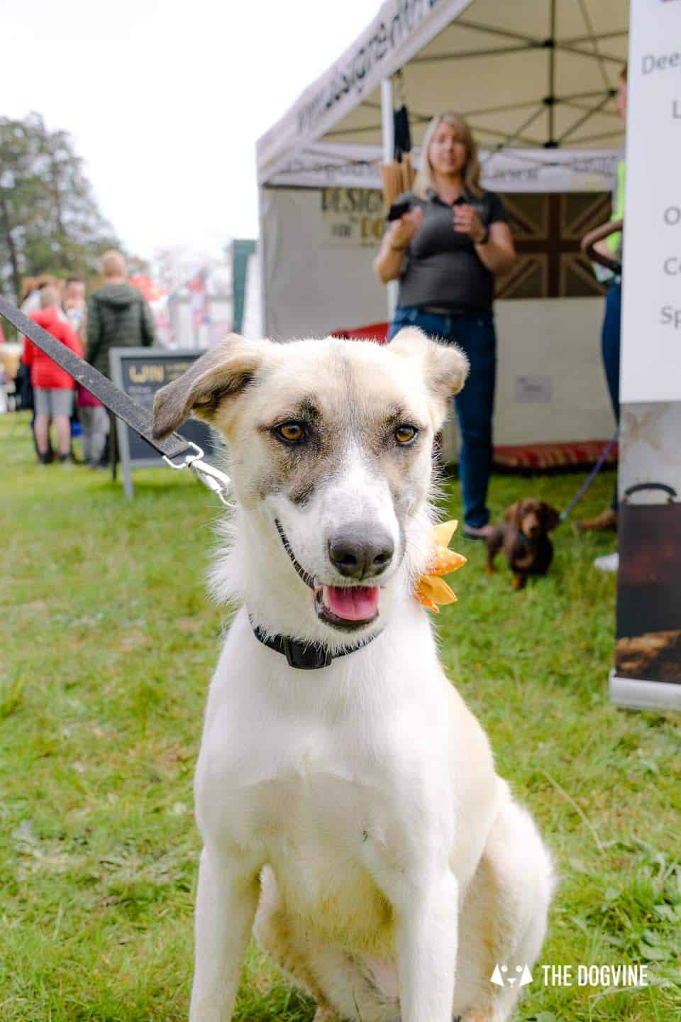 Dogstival New Forest Dog Festival Is A Barking Success 37
