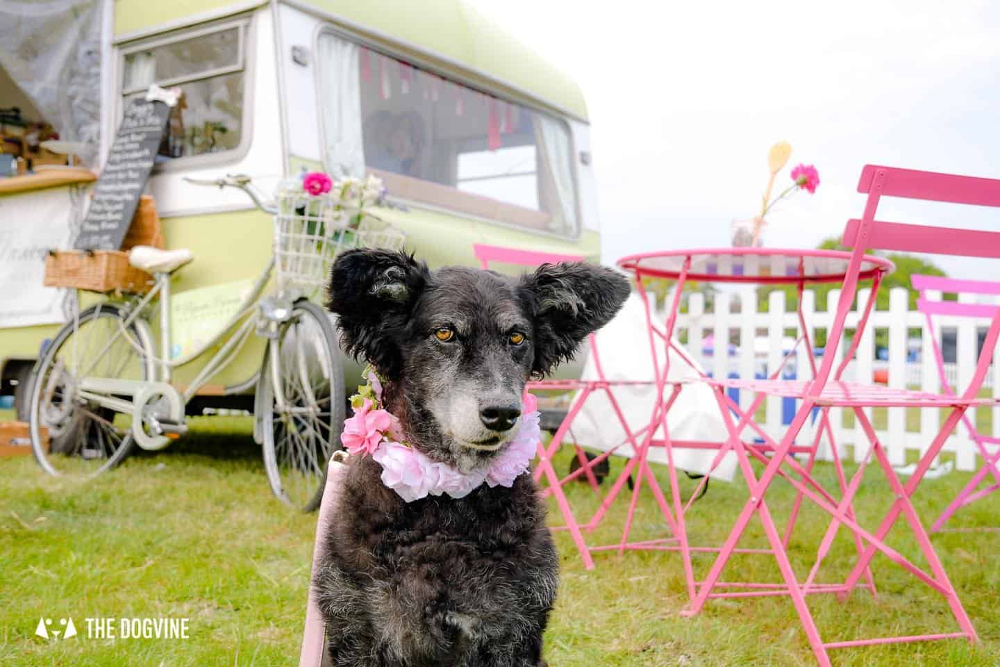 Dogstival New Forest Dog Festival Is A Barking Success 47