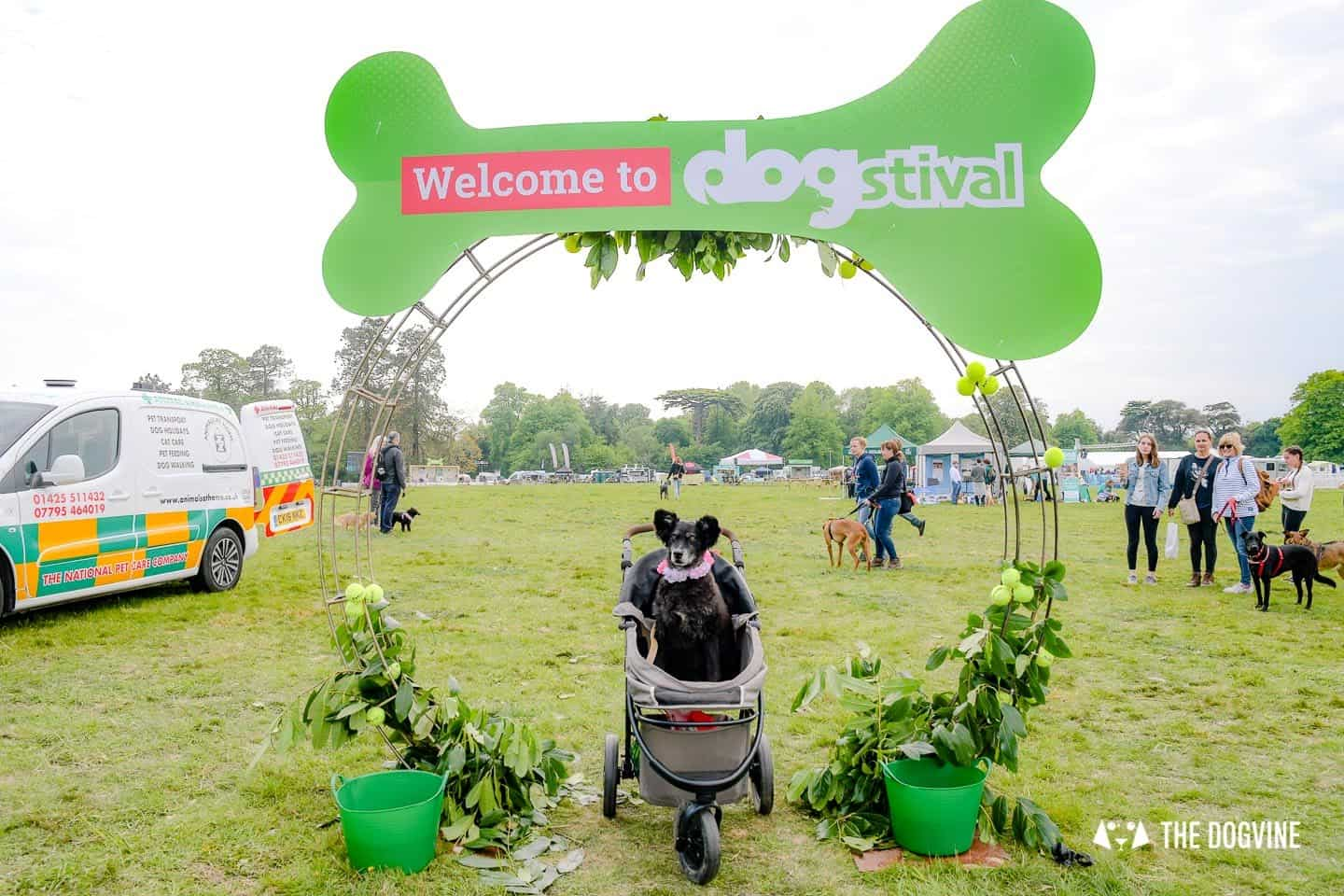 Dogstival New Forest Dog Festival Is A Barking Success 49