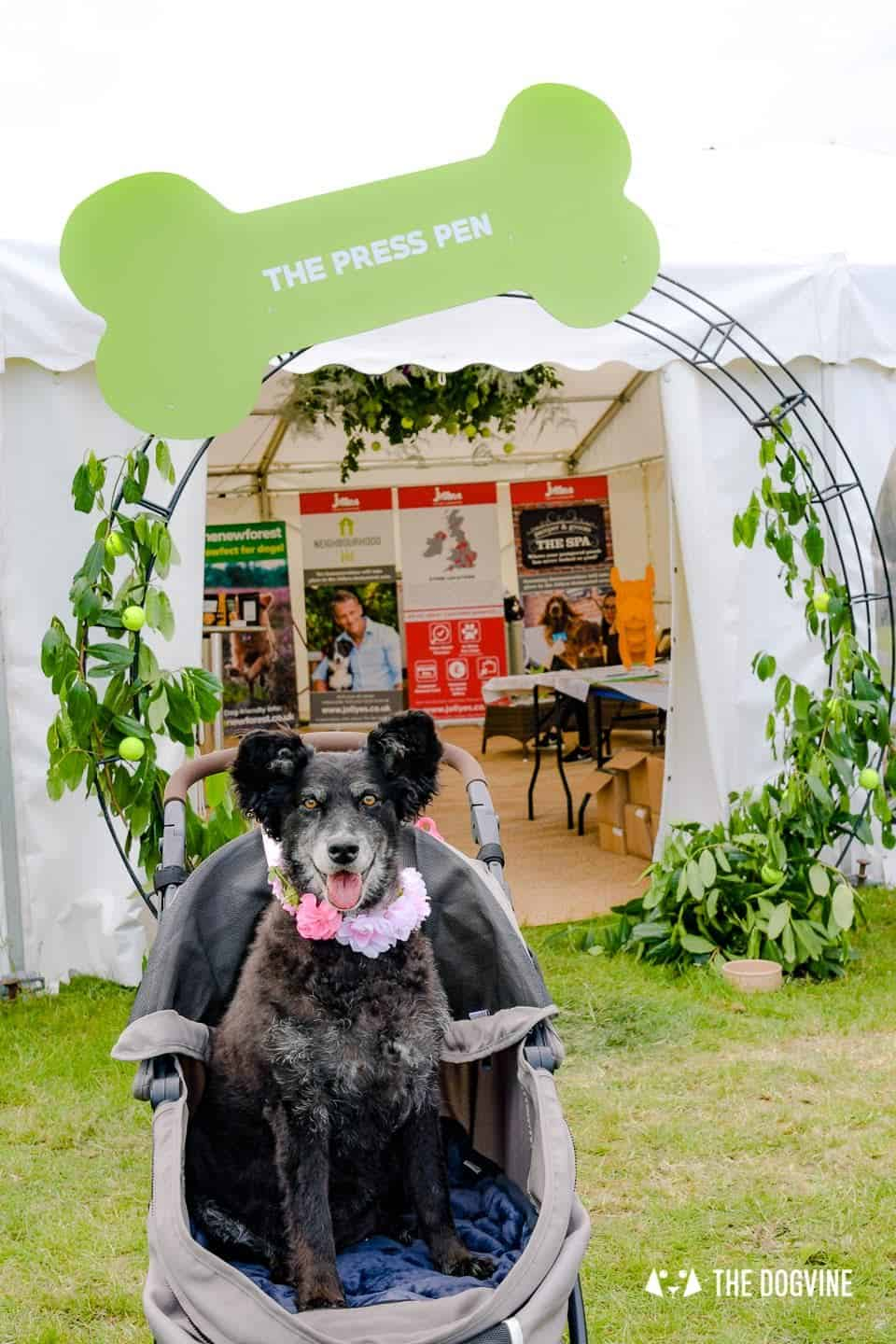 Dogstival New Forest Dog Festival Is A Barking Success 50