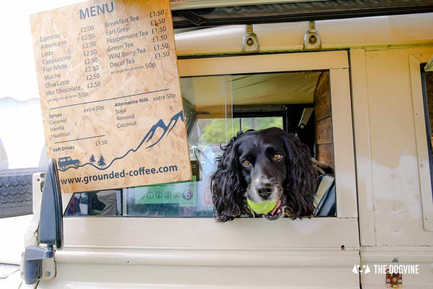 Dogstival New Forest Dog Festival Is A Barking Success 51