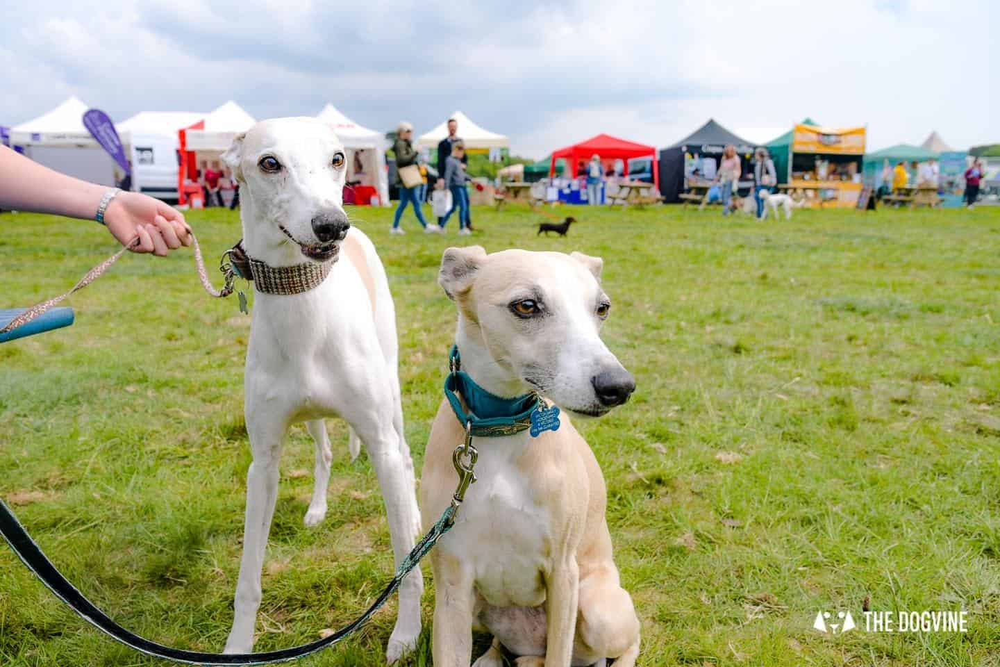 Dogstival New Forest Dog Festival Is A Barking Success 59