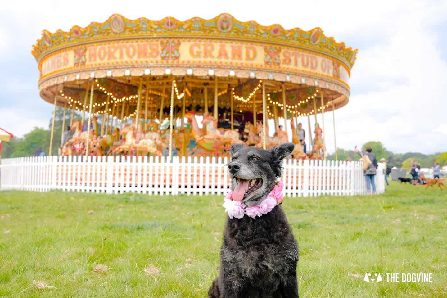 Dogstival New Forest Dog Festival Is A Barking Success 65