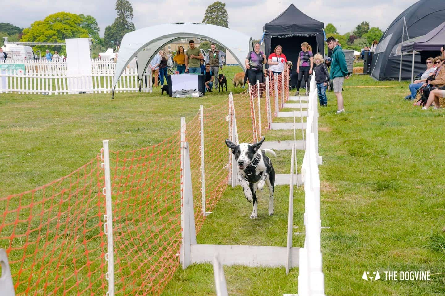 Dogstival New Forest Dog Festival Is A Barking Success 67