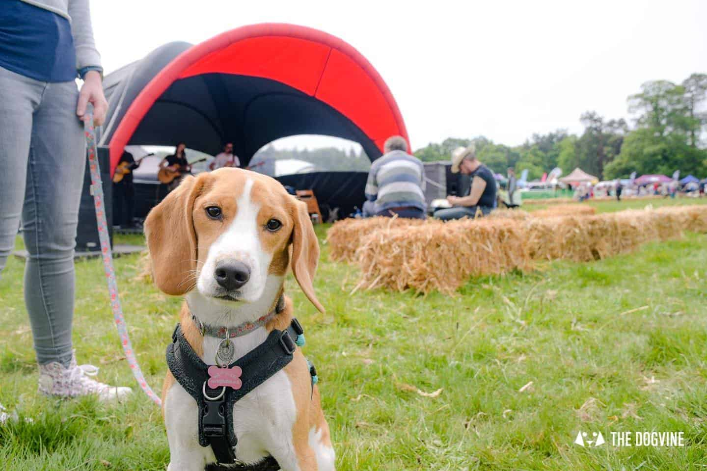 Dogstival New Forest Dog Festival Is A Barking Success 69