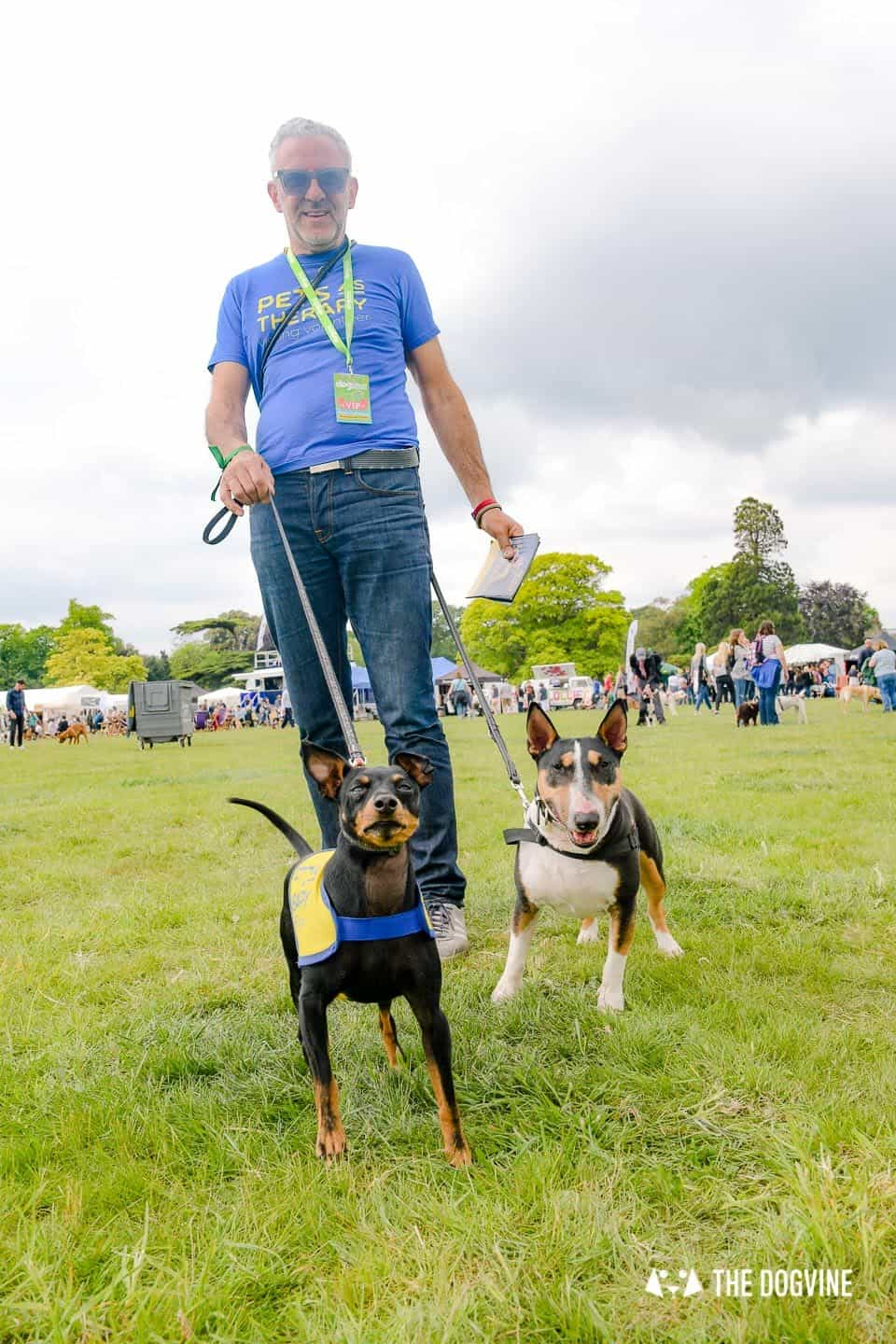 Dogstival New Forest Dog Festival Is A Barking Success 72