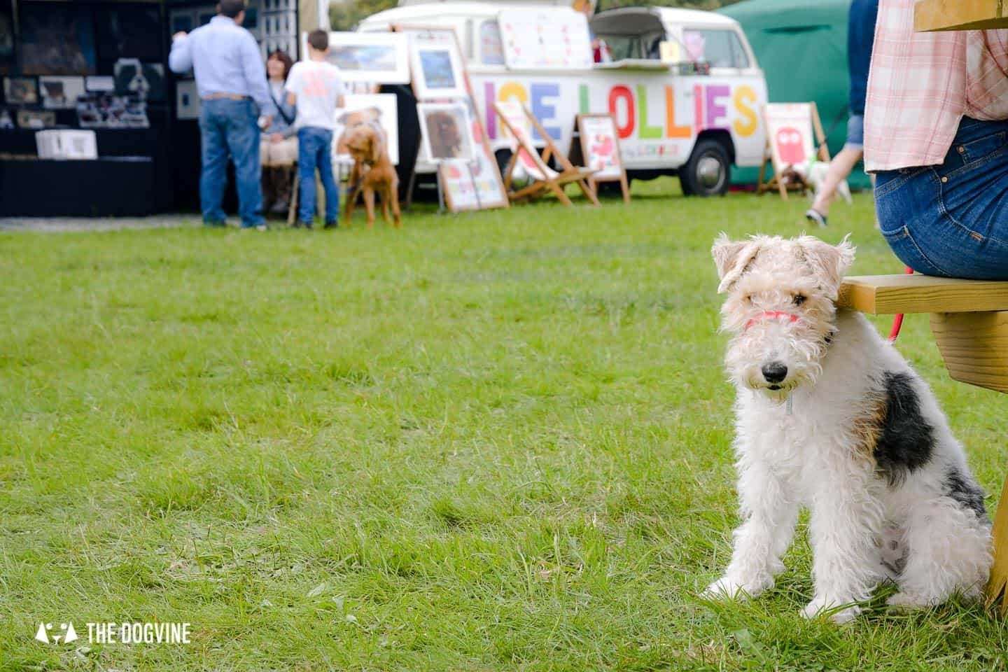 Dogstival New Forest Dog Festival Is A Barking Success 74