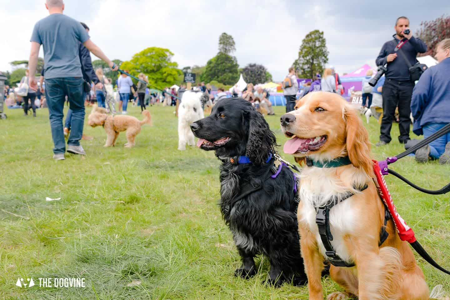 Dogstival New Forest Dog Festival Is A Barking Success 75