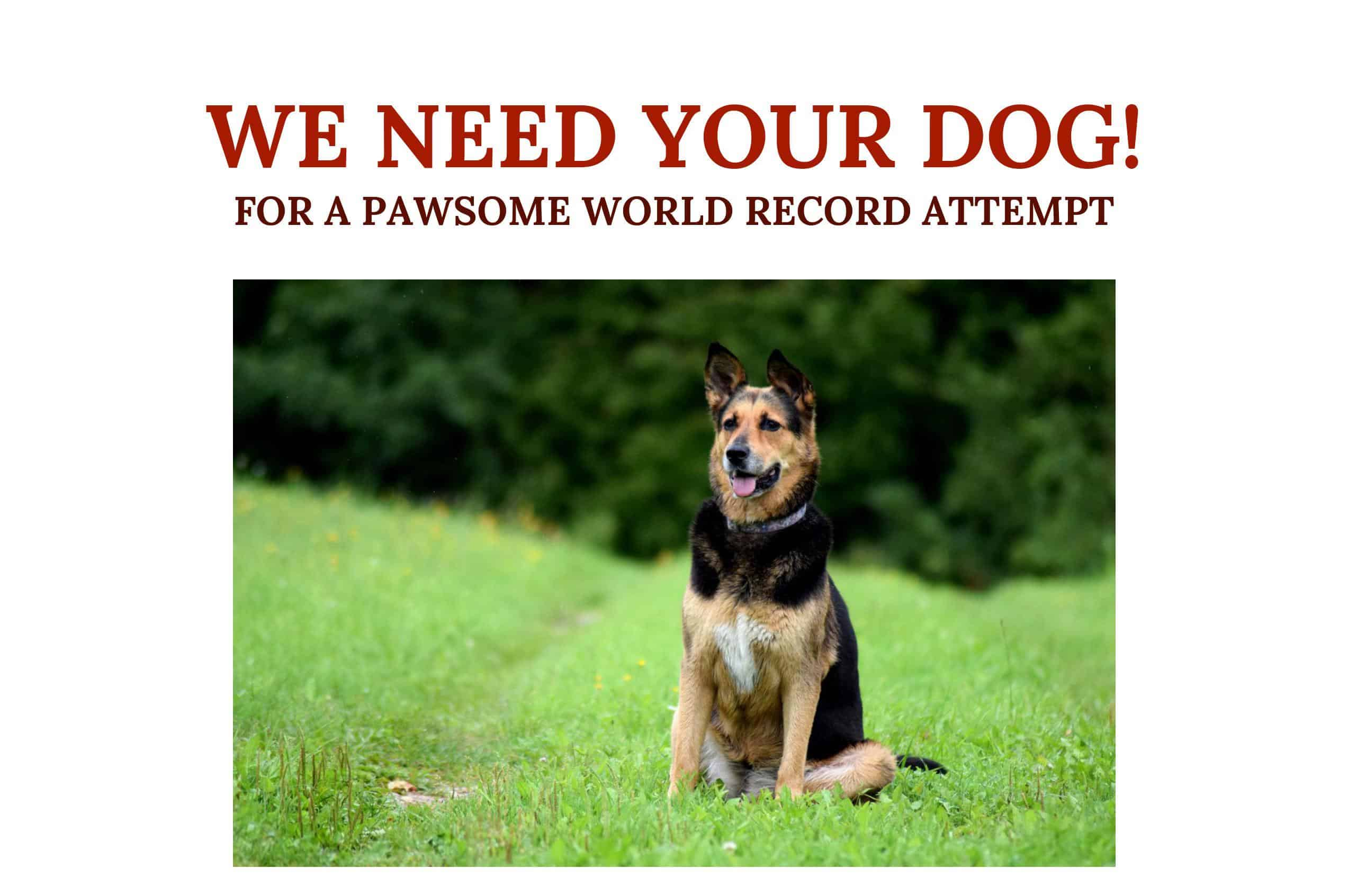 ITV World Record Attempt for Dogs - Lorraine Kelly
