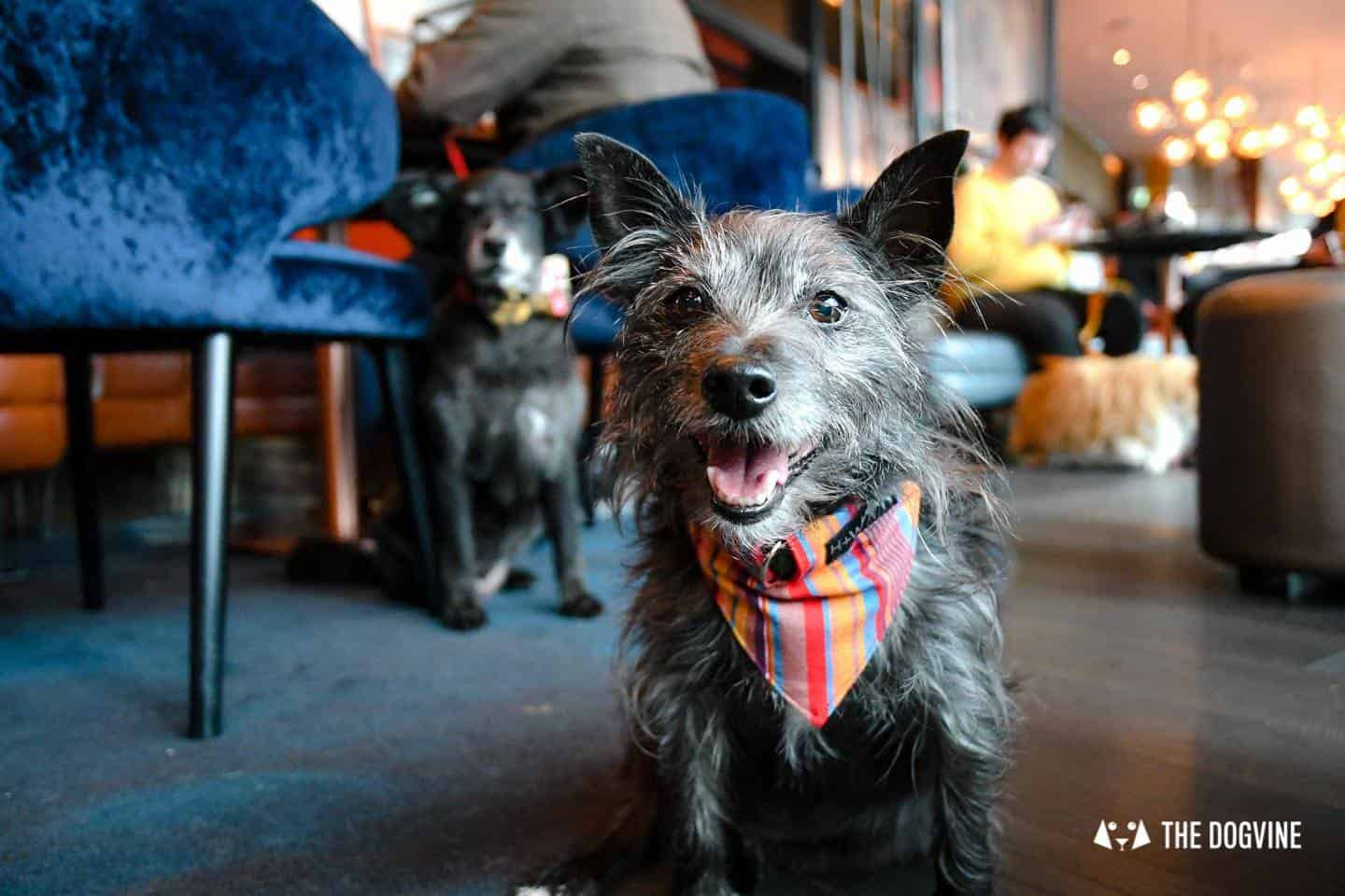 London Dog Events and Things to Do June 2019 - Dog Brunches