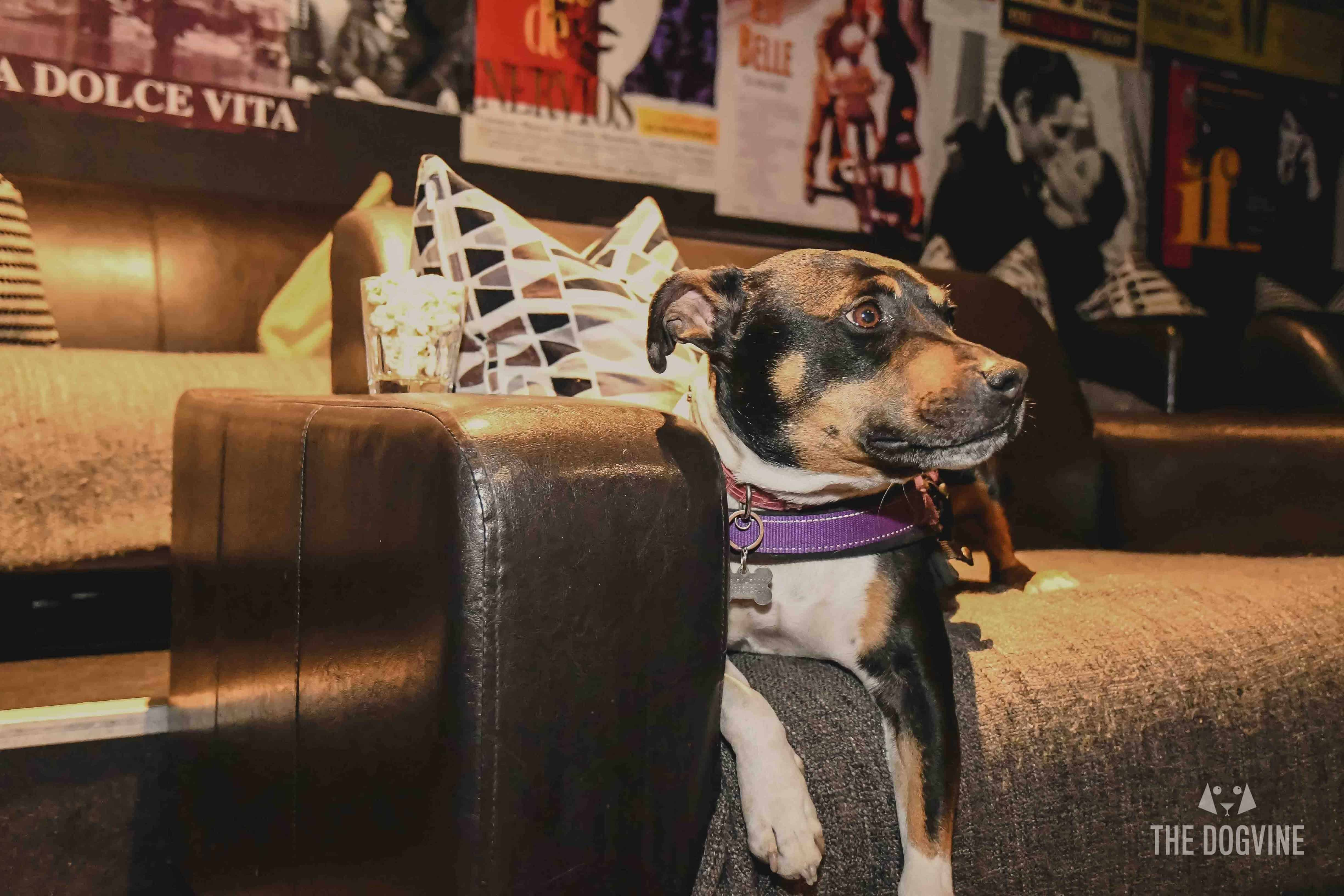 London Dog Events and Things to Do June 2019 - Dog-friendly Cinema