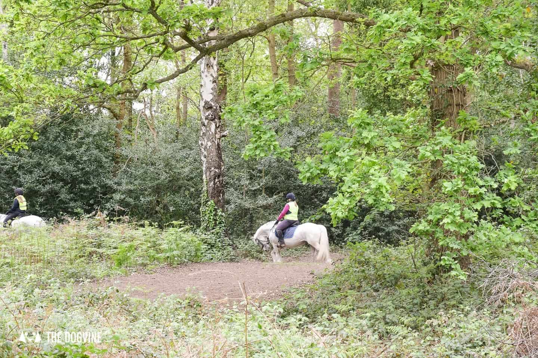 Oxshott Woods Dog Walks - Oxshott Heath and Woods Horse Riding