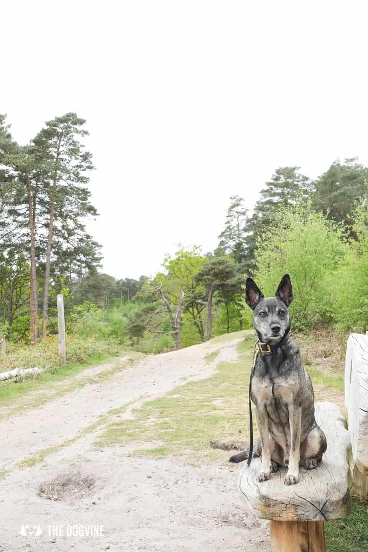 Oxshott Woods Dog Walks - Oxshott Heath and Woods 16