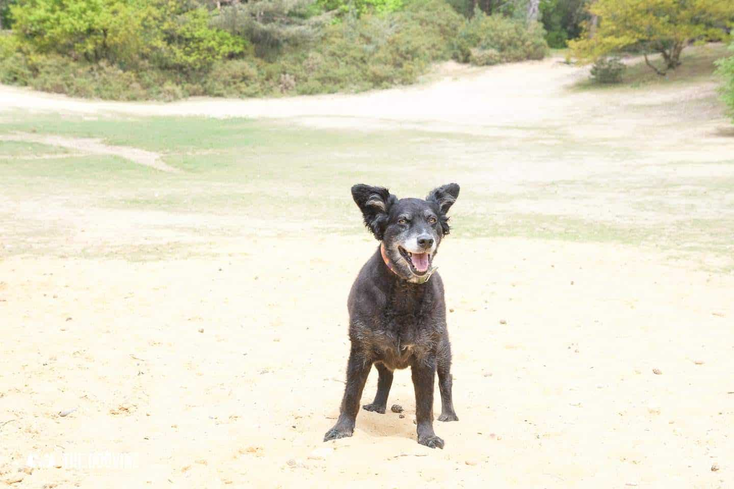 Oxshott Woods Dog Walks - Oxshott Heath and Woods Sandpit 4