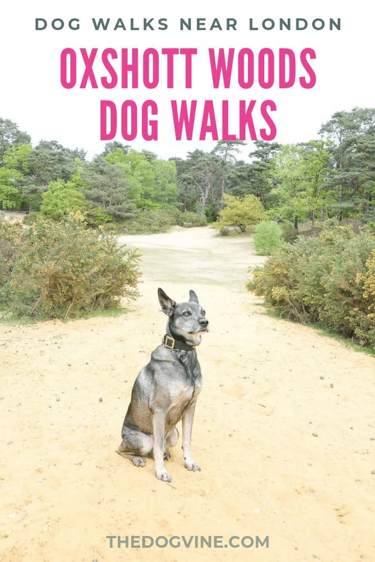 Oxshott Woods Dog Walks - Oxshott Heath and Woods