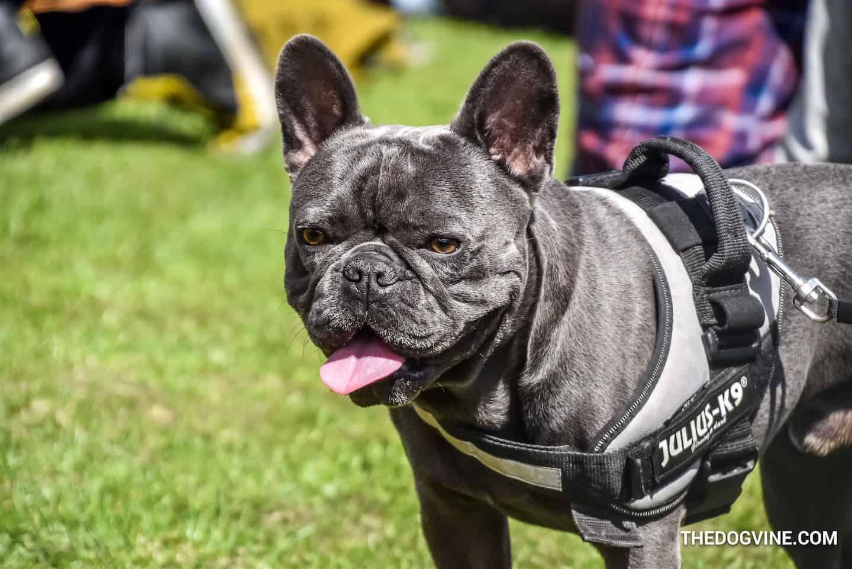 Palace Paws Dog Show 2019