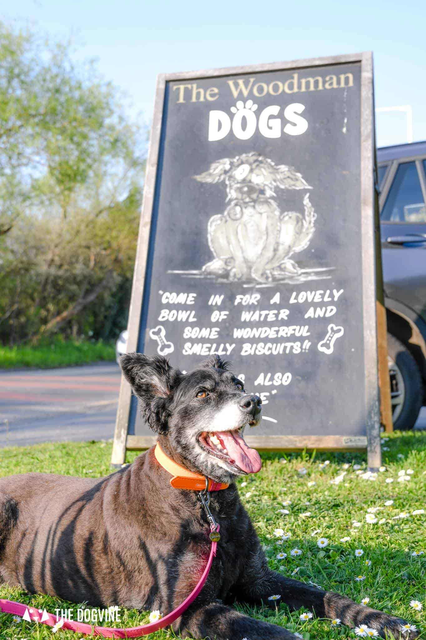 Dog-friendly Pub Ruislip - The Woodman