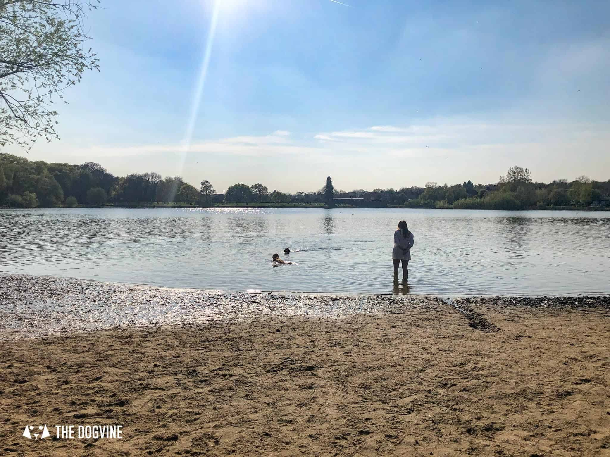 Ruislip Lido Dog Beach in London - Enjoying a paddle