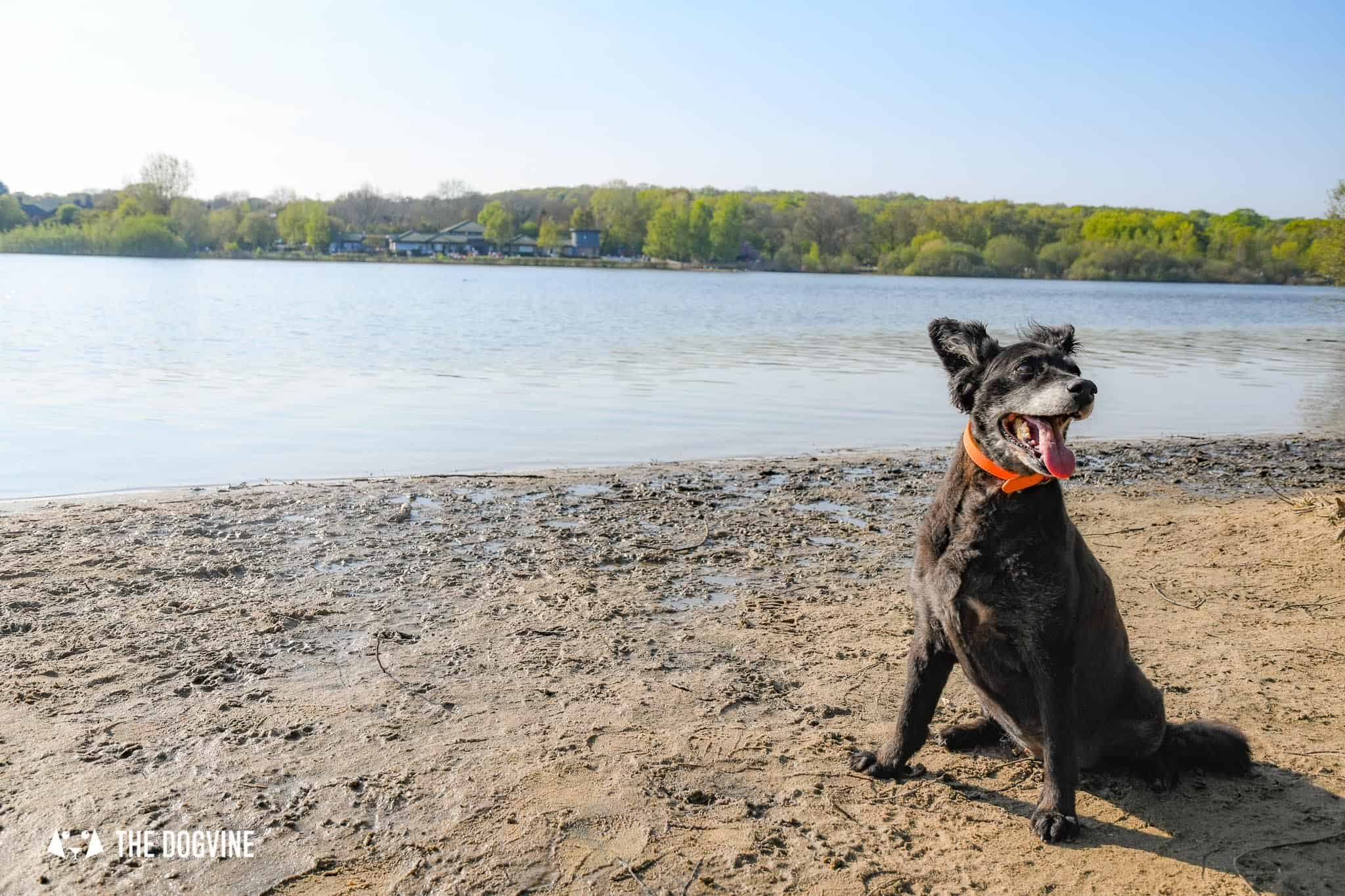 Ruislip Lido Dog Beach in London - Belinha