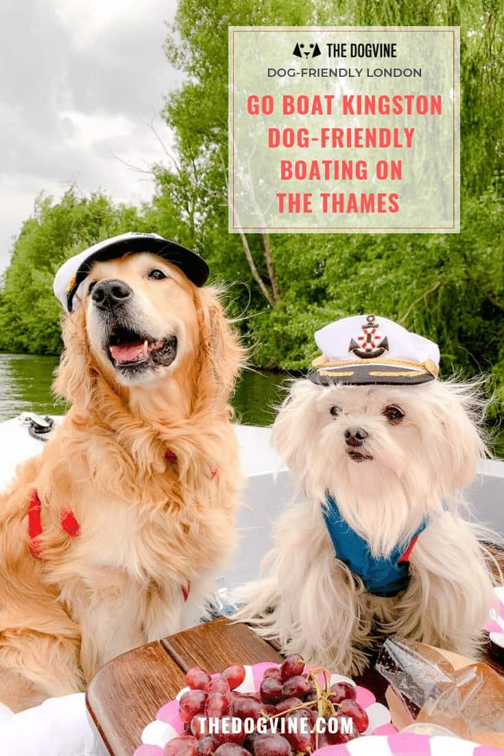 Dog-friendly Go Boat Kingston - All Aboard