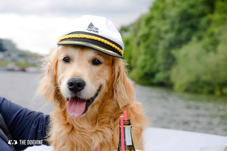 Dog-friendly Go Boat Kingston Upon Thames 1