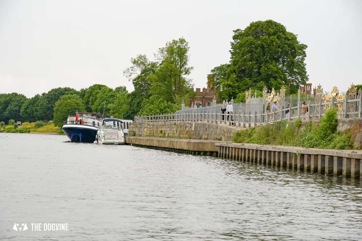Dog-friendly Go Boat Kingston Upon Thames 10
