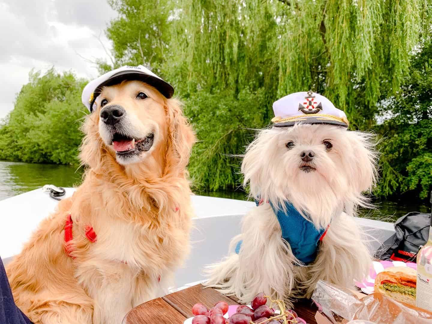 Dogs Day Out On The Thames With Dog-friendly Go Boat Kingston