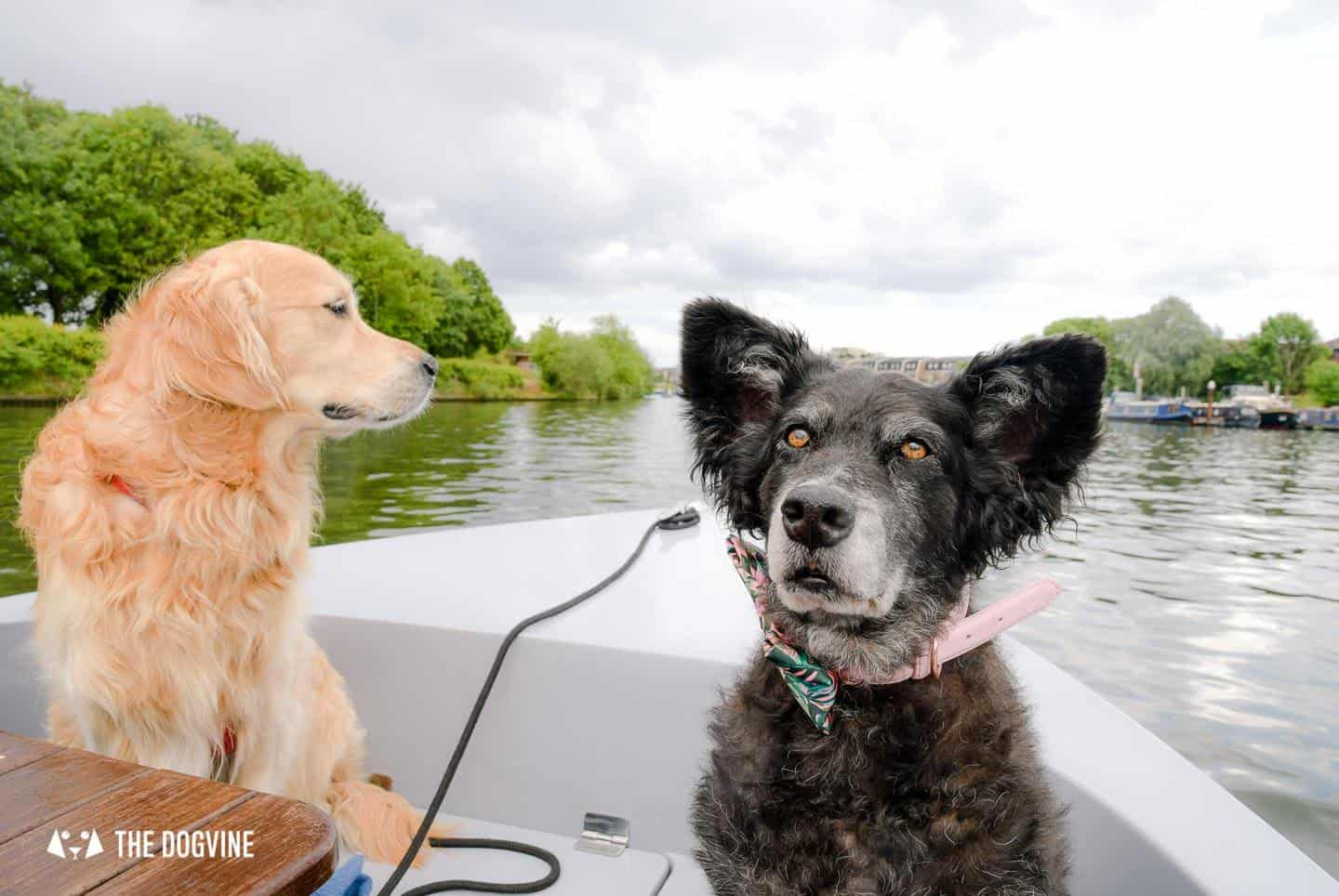 Dog-friendly Go Boat Kingston Upon Thames 17