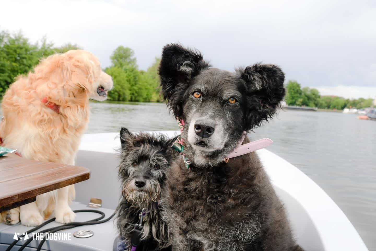 Dog-friendly Go Boat Kingston Upon Thames 19