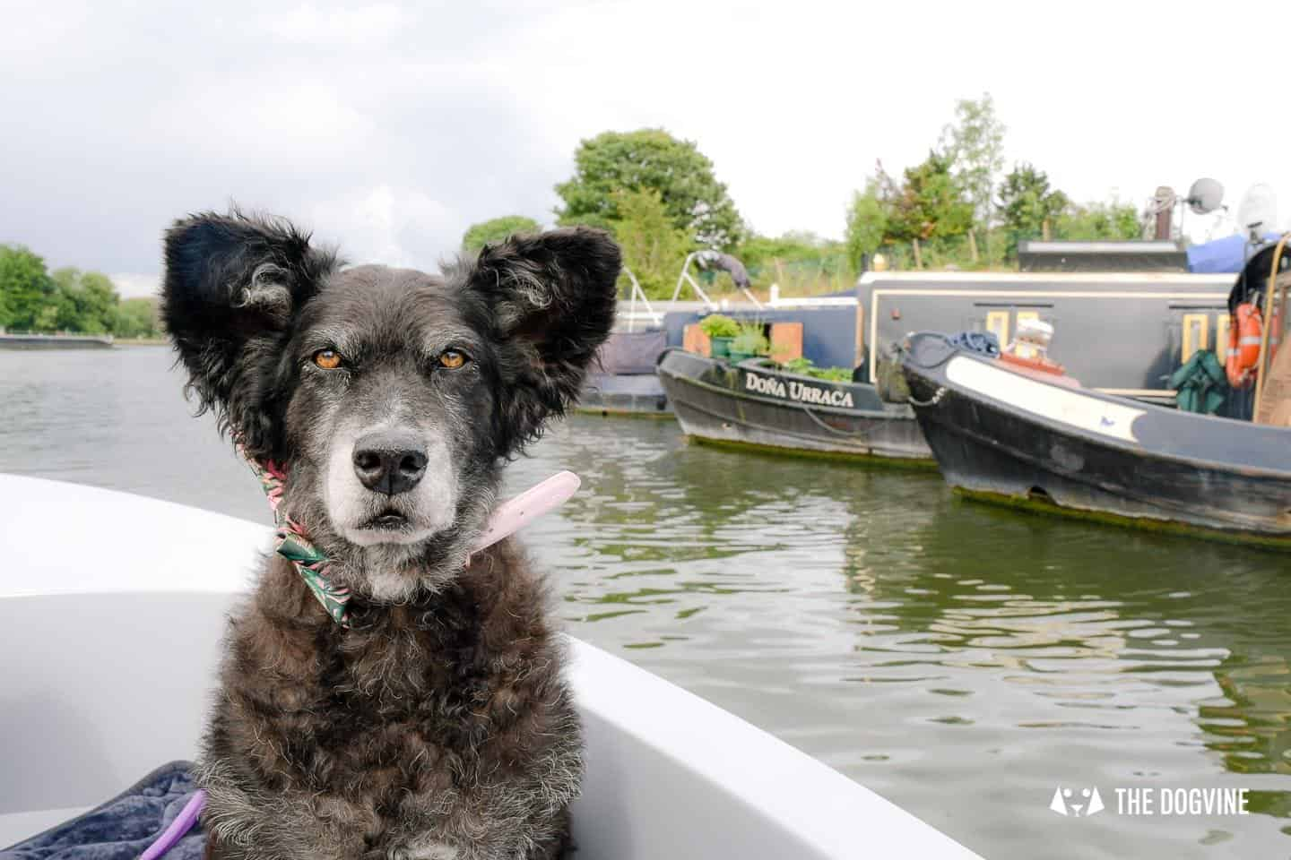 Dog-friendly Go Boat Kingston Upon Thames 20
